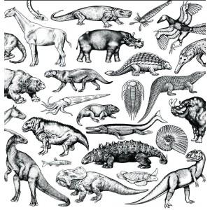 Moschops - Skratch Fossils - 12''